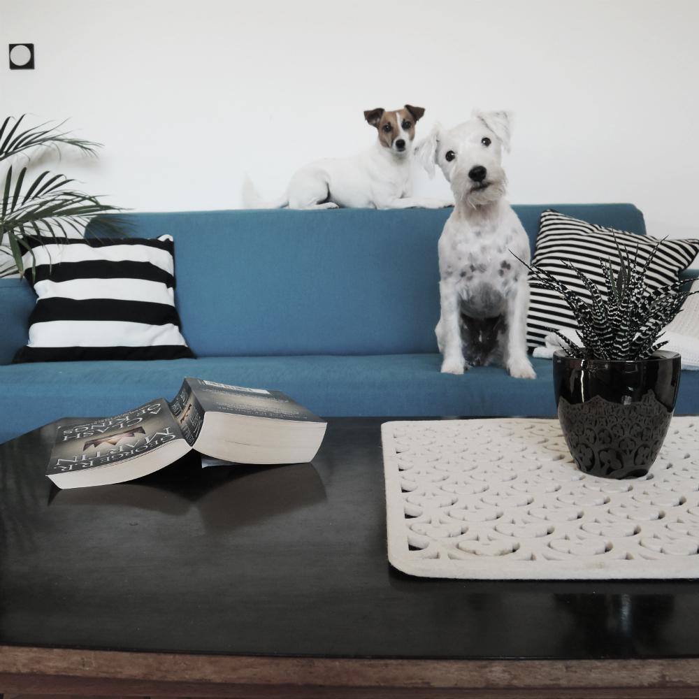 sofa after 29